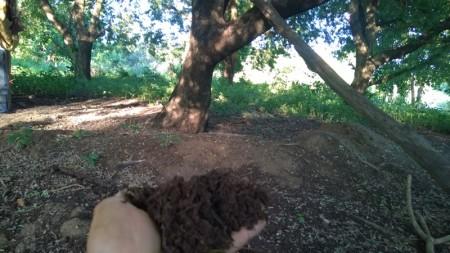 ดินบริเวณใต้ต้นมะขาม